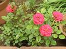 P5170043.JPGのサムネール画像のサムネール画像のサムネール画像のサムネール画像